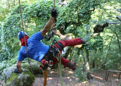 foto-sfondo-arboricoltura-e-treeclimbing